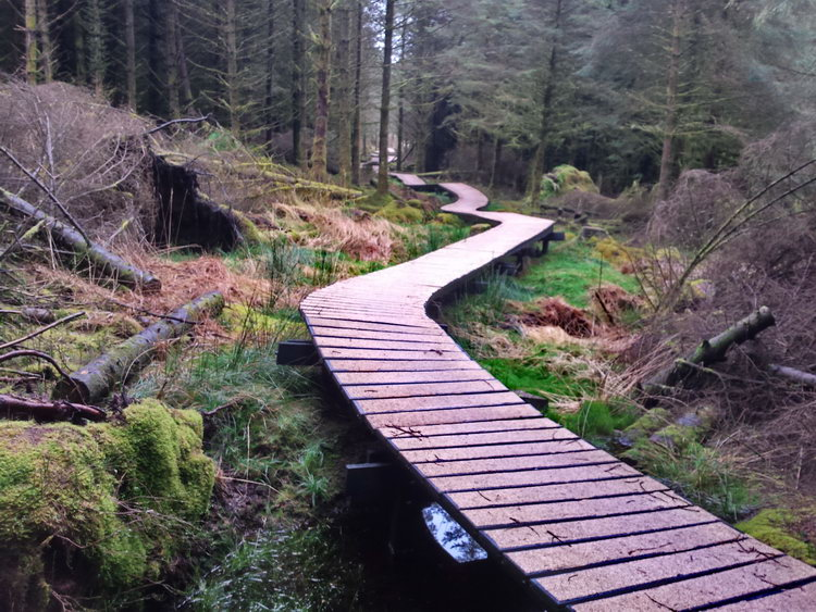 Boardwalk Ballyhoura