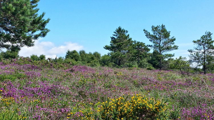 Healthland on Woodbury Common