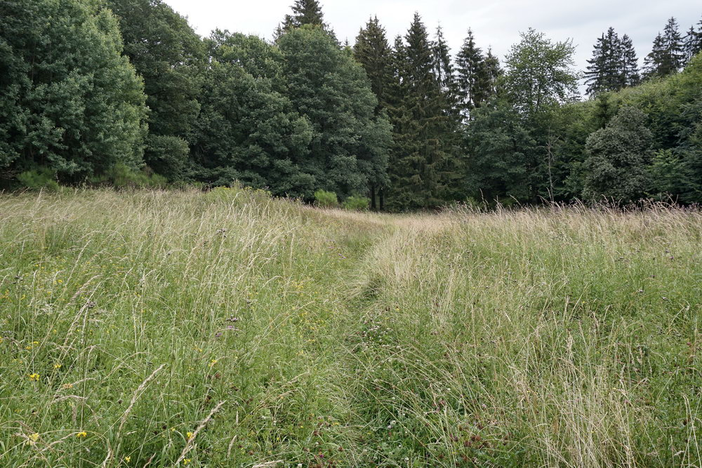 Wildflower meadow singletrack